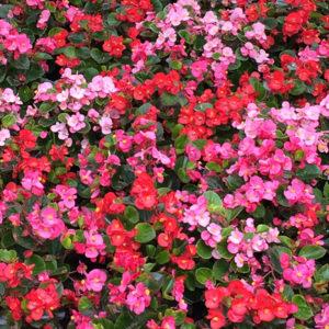 manyflowers