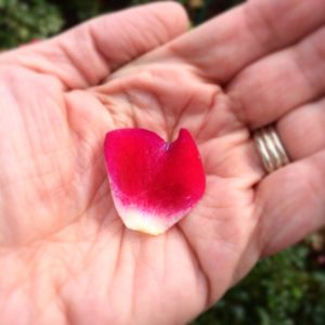 worry-petal