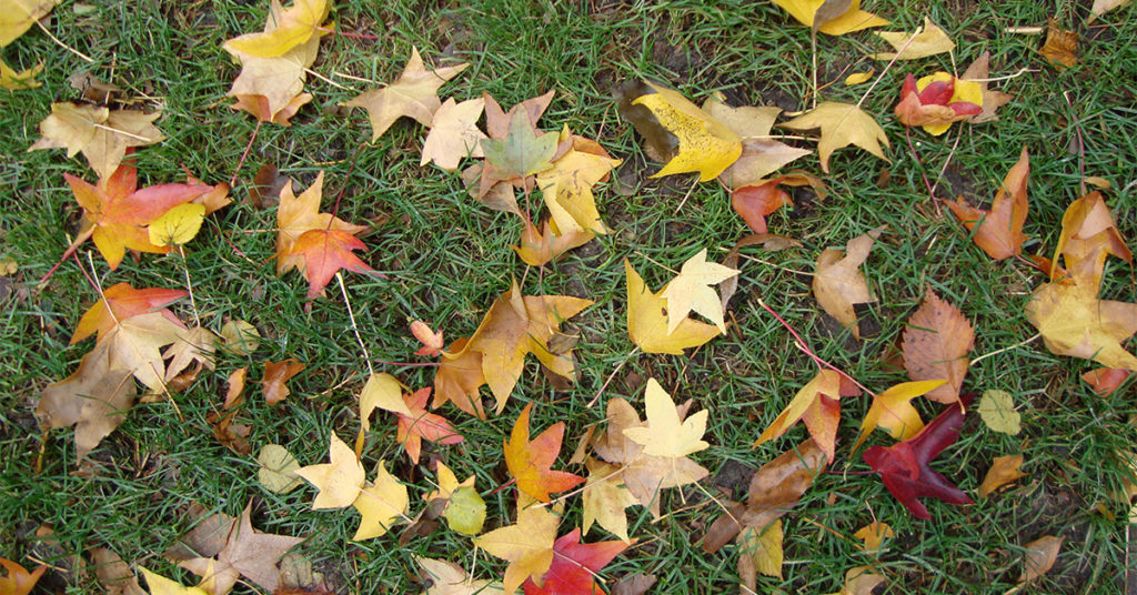 leaves-in-grass