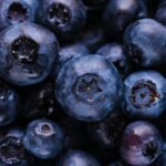 Back to Blueberries